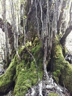 大きな木.jpg